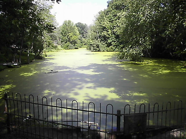 Pond that needs pond algae solutions and pond maintenance