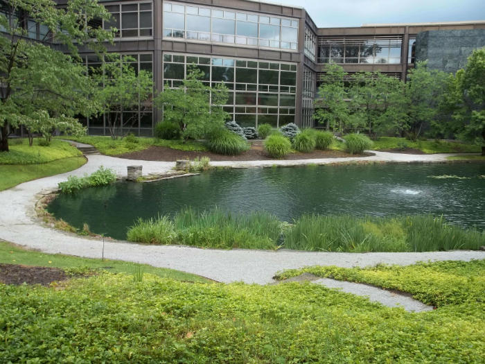 Commercial pond maintenance and cattail removal services
