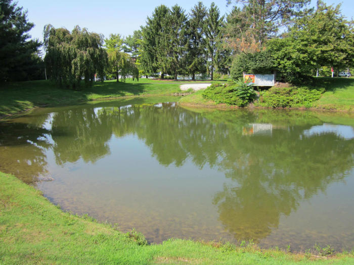 Pond after pond algae solutions and cattail removal services