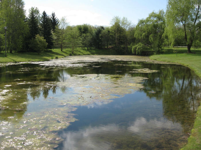 Pond algae that needs to be cleaned with pond maintenance services