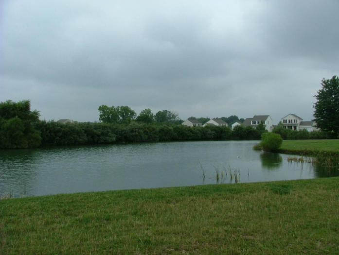 Pond after professional alge control and cattail pond maintenance