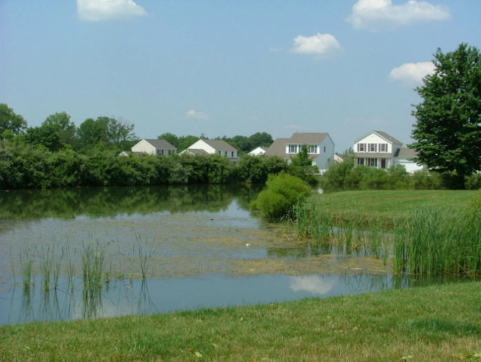 Pond that needs algae control and cattail pond maintenance