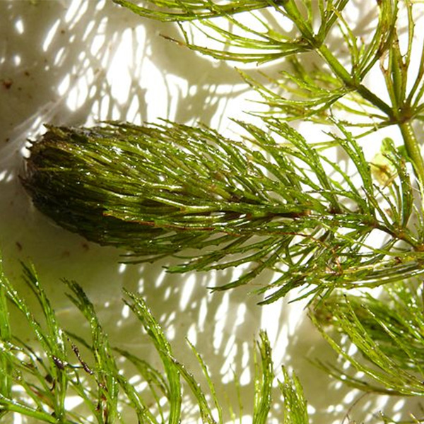 Algae & Plant ID - Get Personalized Pond Care With Plant ID