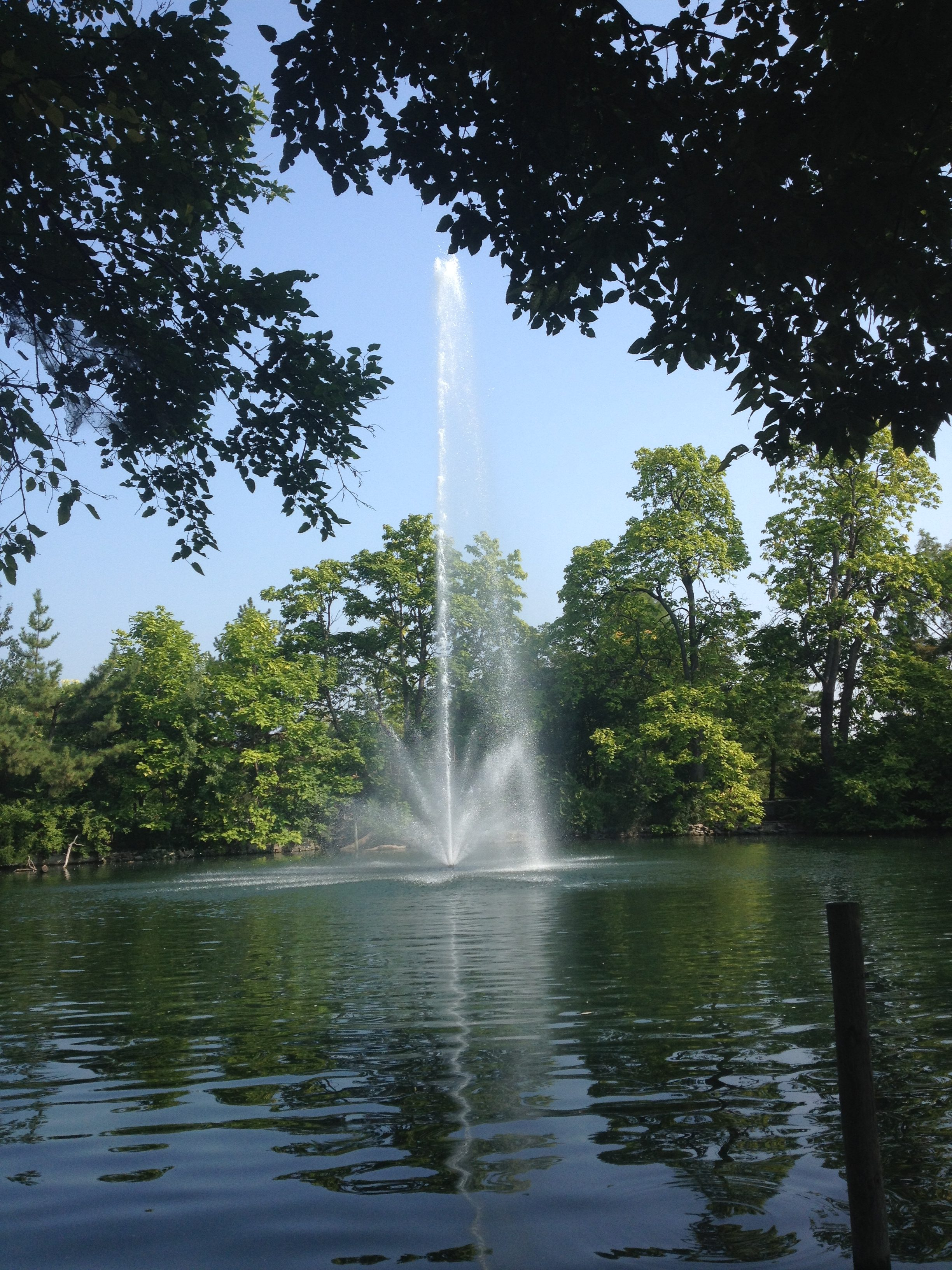 Large floating fountain with professional pond management