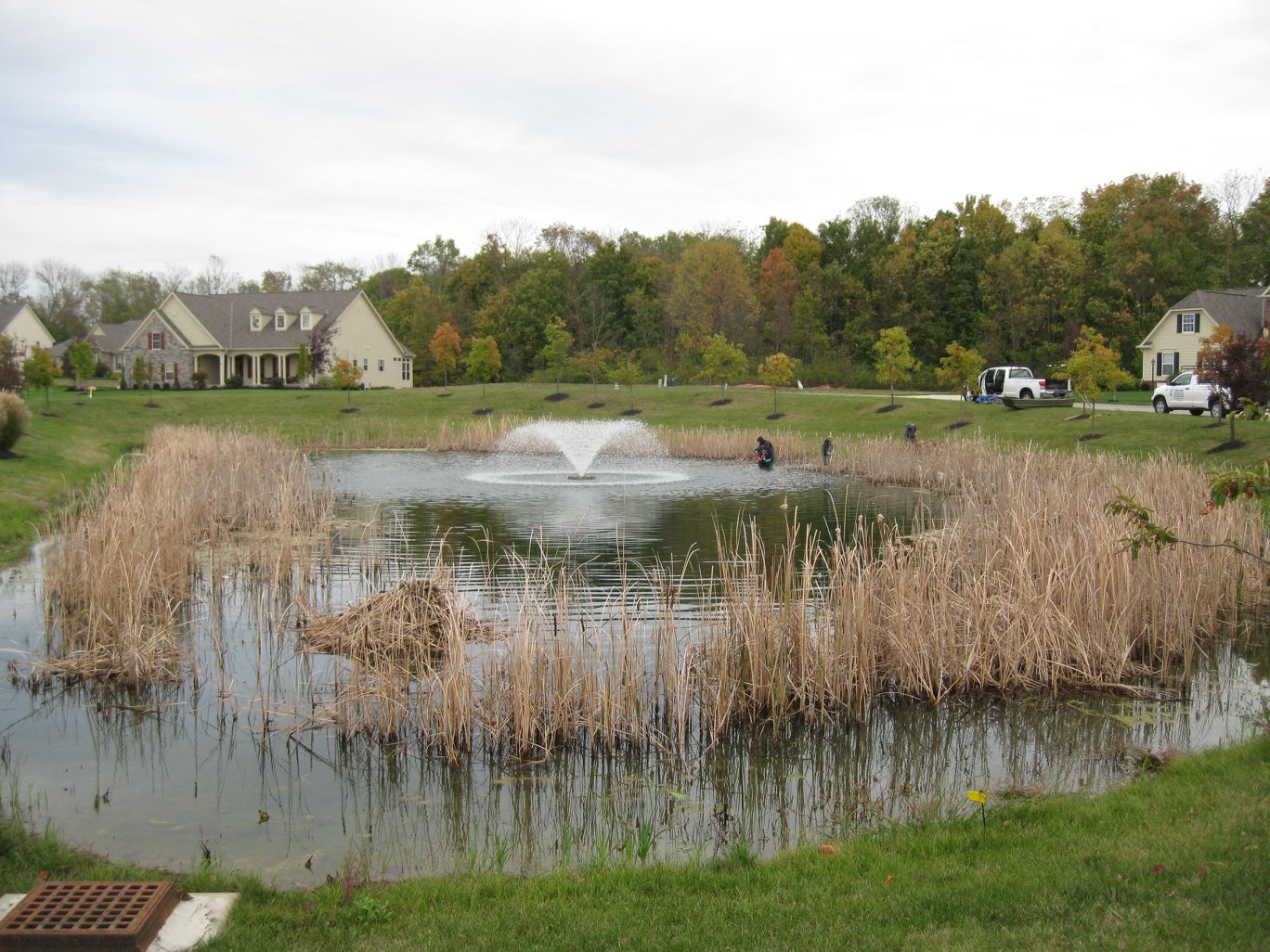 Before cattail removal services and pond management