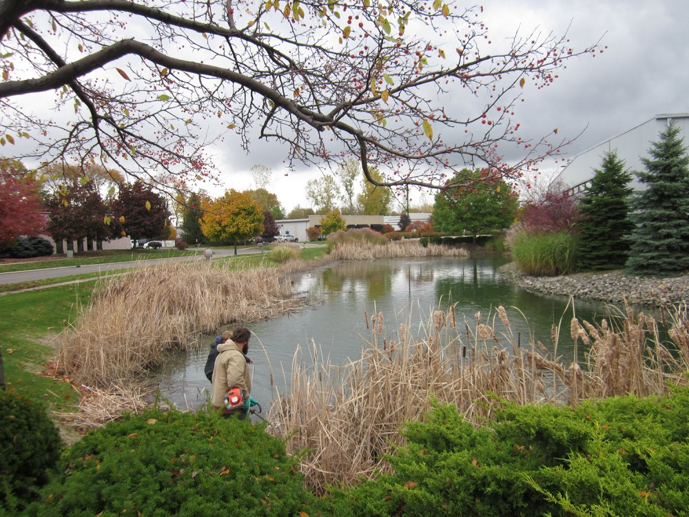 Aqua Doc performing pond management by removing cattails