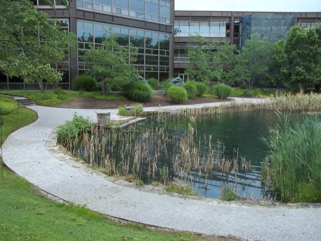 Pond with cattails that needs pond management services