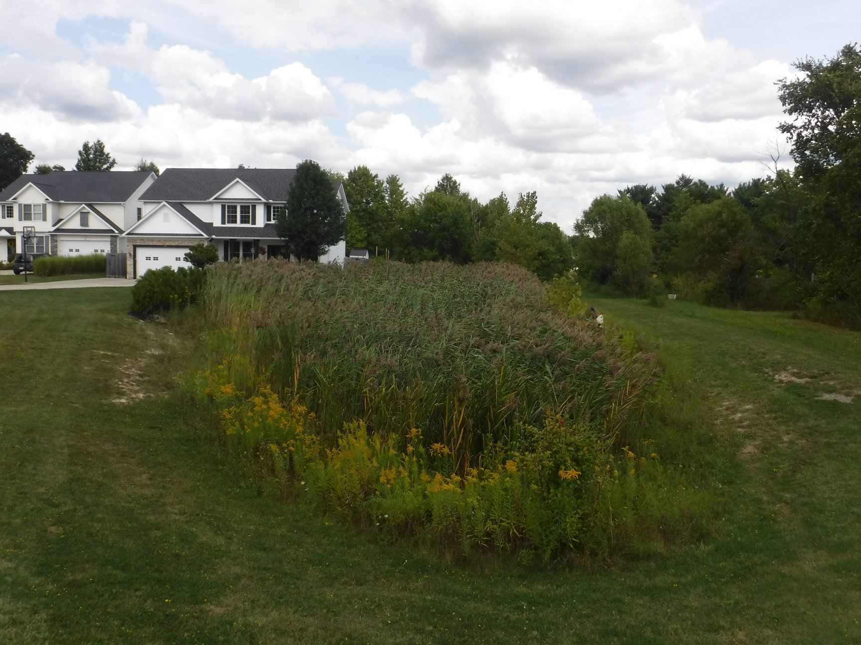 Pond services can help remove cattails