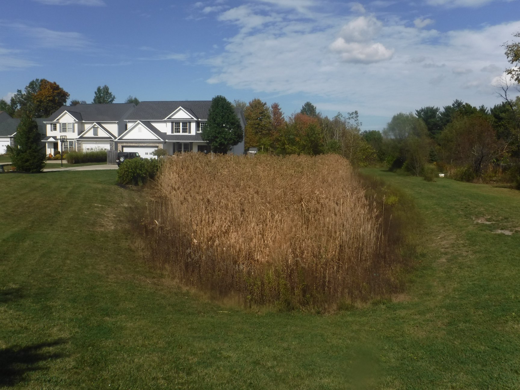 Remove unwanted cattails with pond services from Aquadoc