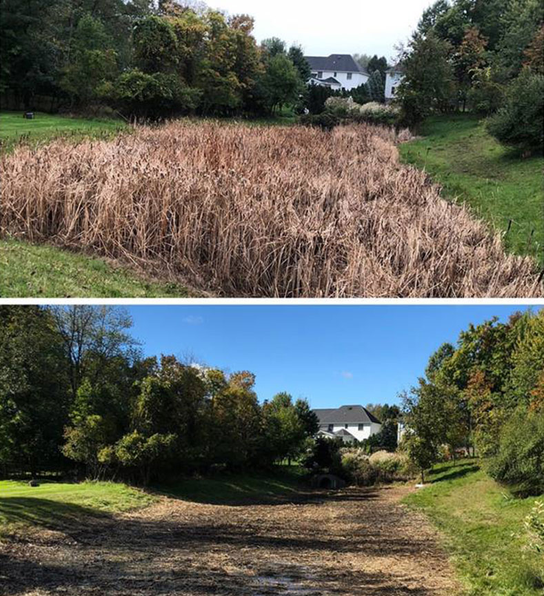 Remove cattails with professional pond maintenance