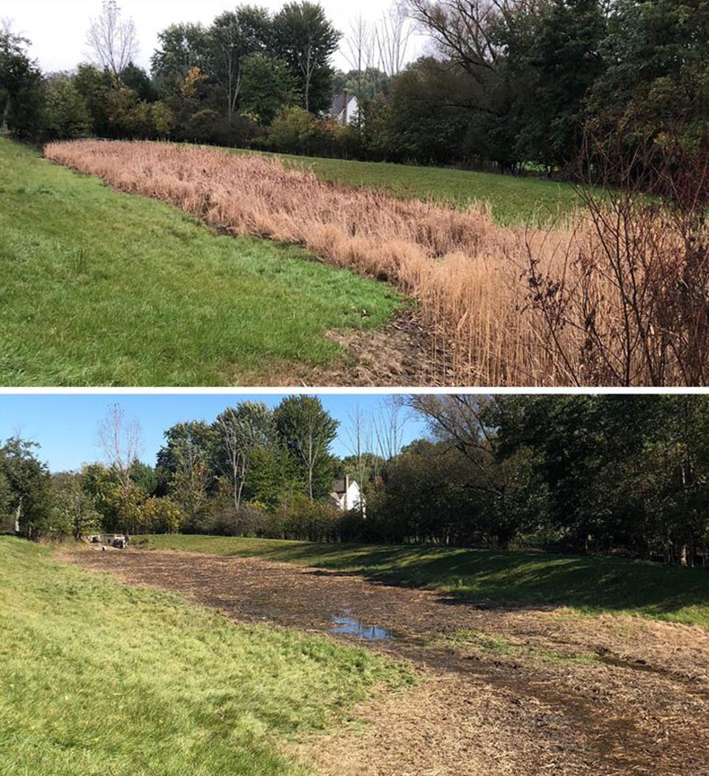 Professional cattail managment and removal