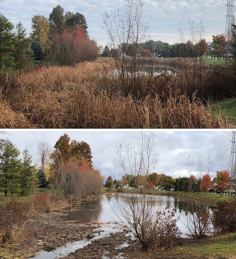 Cattail removal and pond management